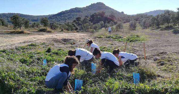 18º turno de voluntariado en Olivares Vivos